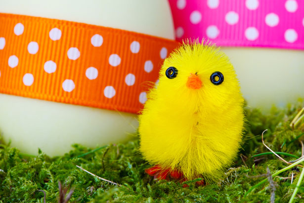 yellow-easter-chick