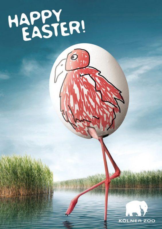 Kölner Zoo реклама