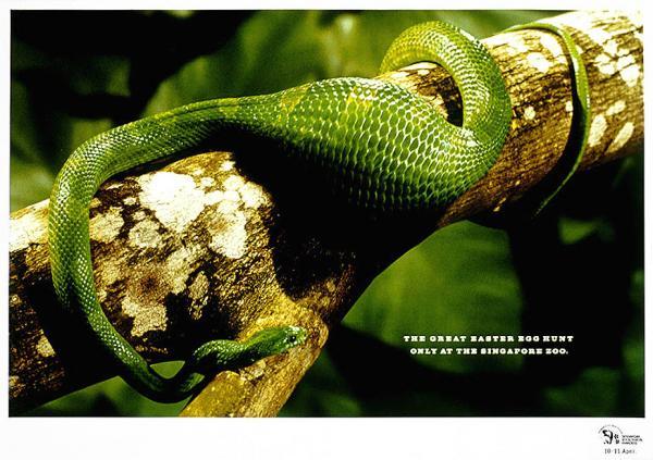 Singapore Zoo - тяхната рекламна кампания