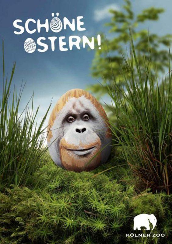 Köln Zoo - горилата